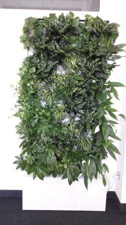 1-Ściana-zielona-tlenowa-newgardenstyle-nowoczesne-ogrody-ogrody-wertykalne-253x450