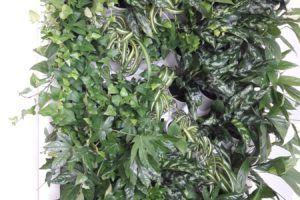 2-Ściana-zielona-tlenowa-newgardenstyle-nowoczesne-ogrody-ogrody-wertykalne-1-300x200