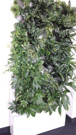 2-Ściana-zielona-tlenowa-newgardenstyle-nowoczesne-ogrody-ogrody-wertykalne-253x450