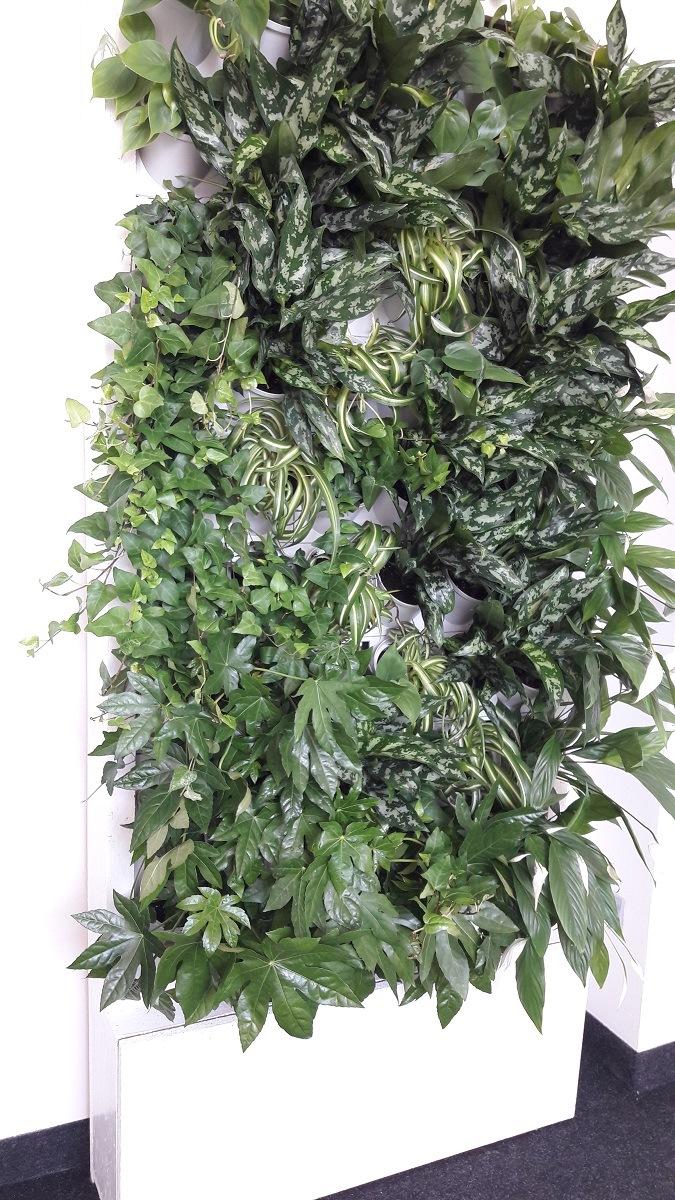 2-Ściana-zielona-tlenowa-newgardenstyle-nowoczesne-ogrody-ogrody-wertykalne