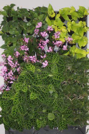 2-1-Ściana-zielona-tlenowa-newgardenstyle-nowoczesne-ogrody-ogrody-wertykalne-299x450