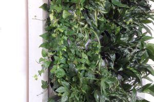 3-Ściana-zielona-tlenowa-newgardenstyle-nowoczesne-ogrody-ogrody-wertykalne-1-300x200