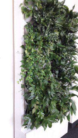 3-Ściana-zielona-tlenowa-newgardenstyle-nowoczesne-ogrody-ogrody-wertykalne-253x450