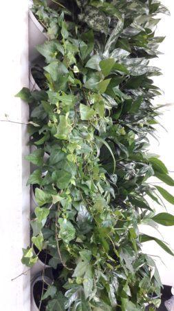 4-Ściana-zielona-tlenowa-newgardenstyle-nowoczesne-ogrody-ogrody-wertykalne-253x450