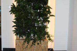 5-Ściana-zielona-tlenowa-newgardenstyle-nowoczesne-ogrody-ogrody-wertykalne-1-300x200
