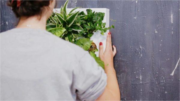 Ogrody-pionowe-orody-wertykalne-zielona-ściana-1-New-Garden-Style-600x337