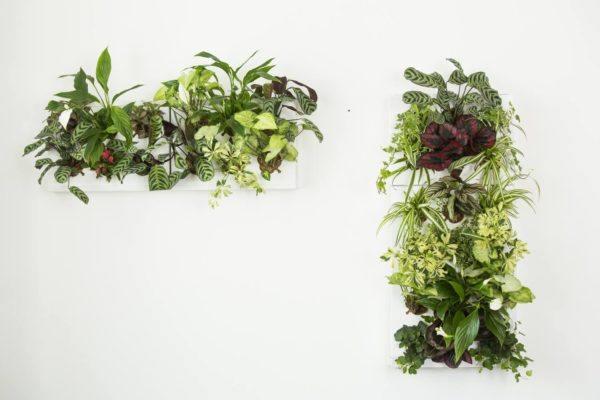 Ogrody-pionowe-orody-wertykalne-zielona-ściana-13-New-Garden-Style-600x400