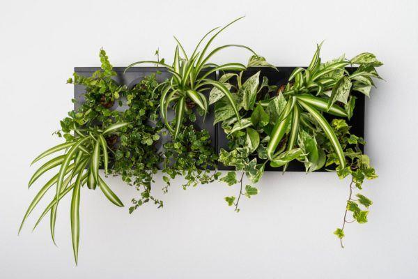 Ogrody-pionowe-orody-wertykalne-zielona-ściana-17-New-Garden-Style-600x400
