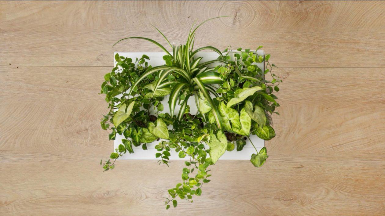 Ogrody-pionowe-orody-wertykalne-zielona-ściana-2-New-Garden-Style-1-1260x708