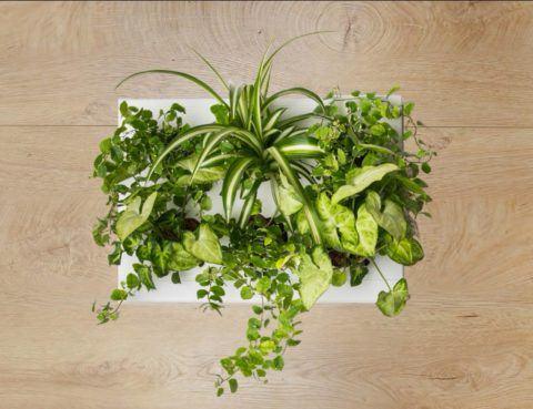 Ogrody-pionowe-orody-wertykalne-zielona-ściana-2-New-Garden-Style-1-480x369