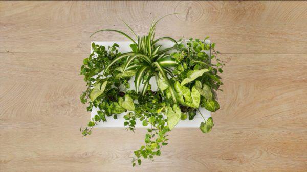 Ogrody-pionowe-orody-wertykalne-zielona-ściana-2-New-Garden-Style-600x337