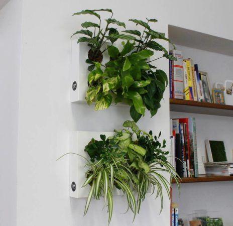 Ogrody-pionowe-orody-wertykalne-zielona-ściana-3-New-Garden-Style-464x450