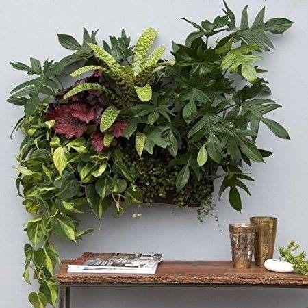 Ogrody-pionowe-orody-wertykalne-zielona-ściana-4-New-Garden-Style-450x450