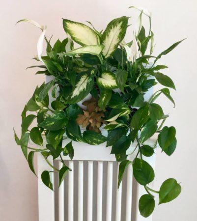 Ogrody-pionowe-orody-wertykalne-zielona-ściana-9-New-Garden-Style-401x450
